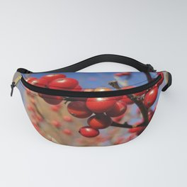 Winterberries glow against a blue autumn sky Fanny Pack