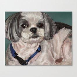 Shih Tzu Painting Canvas Print