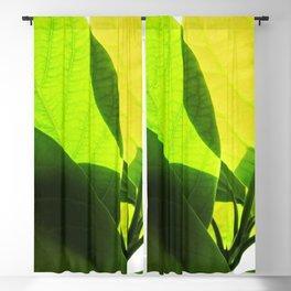 Avocado Leaves Blackout Curtain