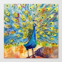 Peacock Pootinella Canvas Print