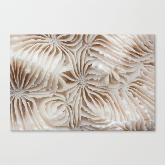 Coral Pattern Canvas Print