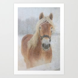 Winter Horse - JUSTART (c) Art Print