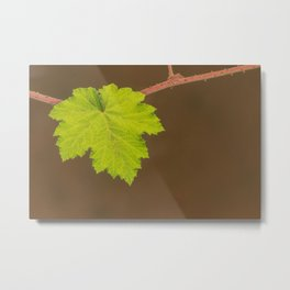 The green Leave Metal Print