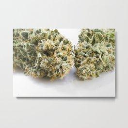 Two Buds Metal Print