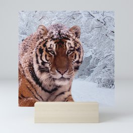 Tiger and Snow Mini Art Print