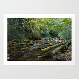 Great Smoky Mountains - Creek Art Print