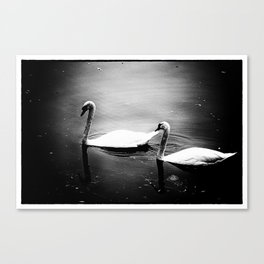 Two swans on lake Huron Canvas Print