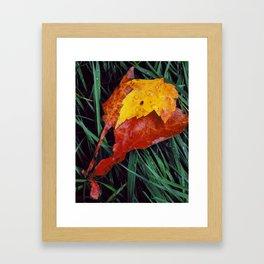 Autumn Leaves After the Rain Framed Art Print