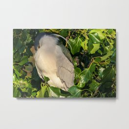 Getting Ready to Sleep Metal Print