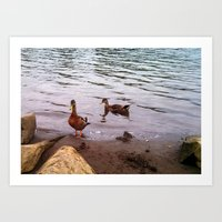 ducks Art Prints featuring Ducks by Morgan.Andrews.Art