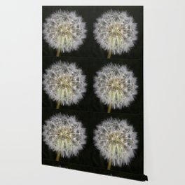 Dandelion seed ball Wallpaper