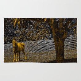 Cute miniature horse foal. Rug