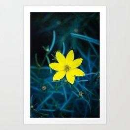 Cobalt Flower Art Print