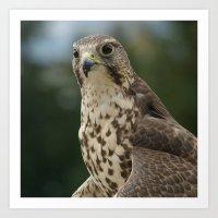 hawk Art Prints featuring Hawk by Herzensdinge