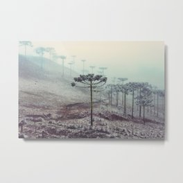 Winter Araucaria Metal Print