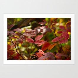 Leaves in Red Art Print