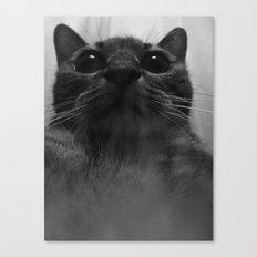 a cat Canvas Print