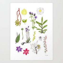 Herbarium #2 Art Print