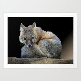 Eyes of the Fox Art Print