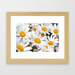 Daisy Flowers 0136 Framed Art Print