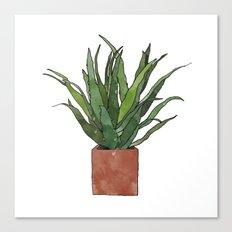 Aloe Vera - Watercolor Illustration Canvas Print
