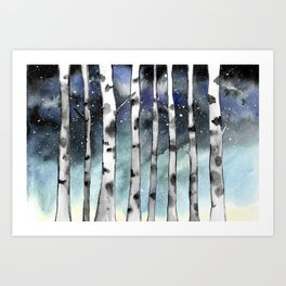 Birch Shadows In Winter Art Print