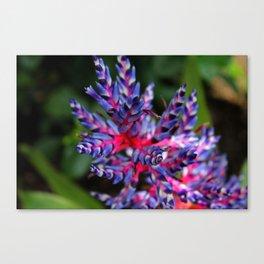Bromeliad I Canvas Print