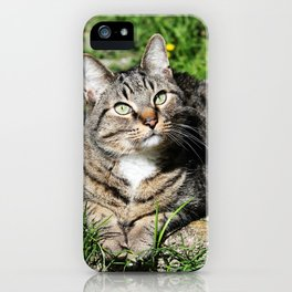 Thinking Cat in Sunlight Portrait Photography iPhone Case