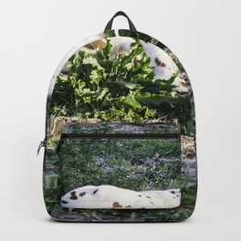 The baby Colt Backpack