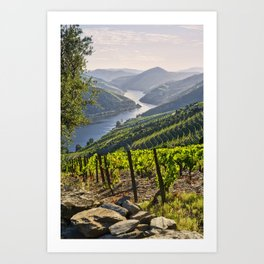 Vineyards along the Douro Valley, Portugal Art Print