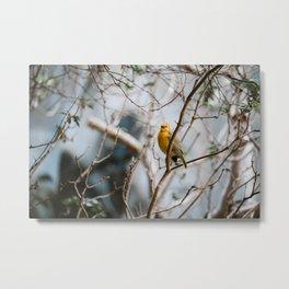 Yellow Wanderess Metal Print