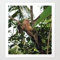 Costa Rican Monkey in the Wild Art Print