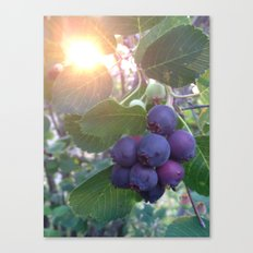 Berries in the Sun Canvas Print