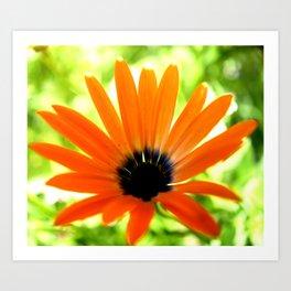 Solar orange daisy flower Art Print
