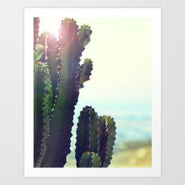 Sunny cacti Art Print