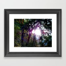 Trees at Lake Crescent Framed Art Print
