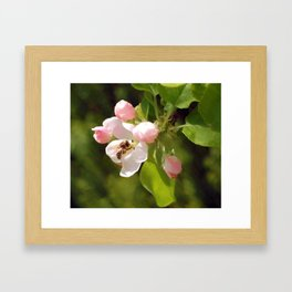 Apple Blossom and bee Framed Art Print