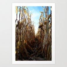Corn Fields Art Print