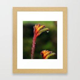 Kangaroo Paw Flower Framed Art Print