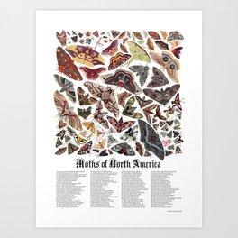 Moths of North America Art Print