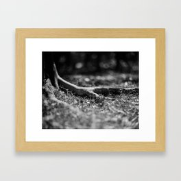 Nook #1 - Fomapan Creative 200 (4x5 film) Framed Art Print