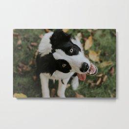 Happy Pup Metal Print