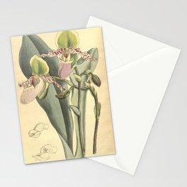 Flower 8084 paphiopedilum glaucophyllum Stationery Cards