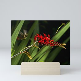Rufous Hummingbird 2 Mini Art Print