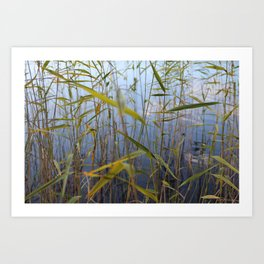 Bed of reeds Art Print