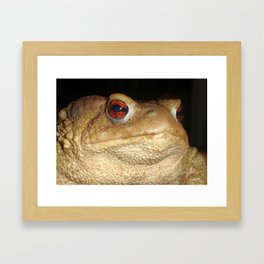 Close Up Portrait of A Common Toad Framed Art Print