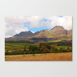 South Africa Vineyards Canvas Print