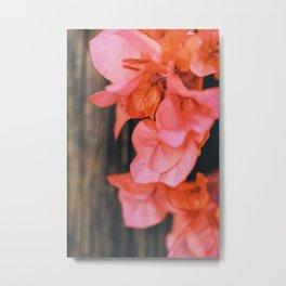 Coral Metal Print