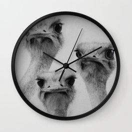 Ostriches Wall Clock