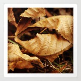 Crinkle leaves Art Print